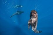 2 Guanyadora categoria subaquàtica